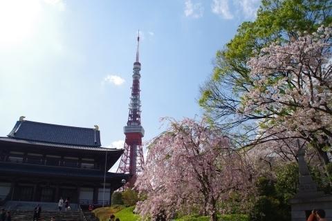 枝垂桜と東京タワー2