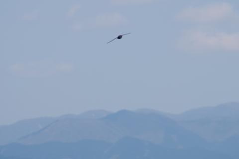 丹沢方面の眺め