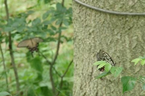2種類の蝶