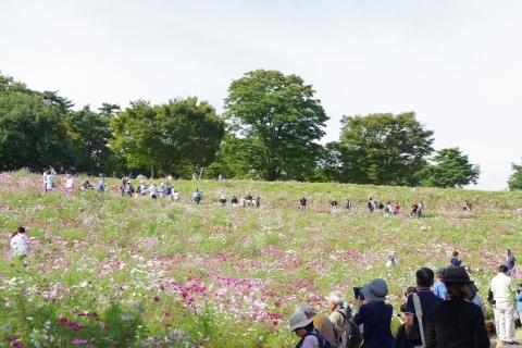 昭和記念公園・花の丘