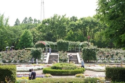 智光山公園バラ園