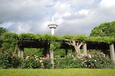 所沢航空記念公園のバラ園