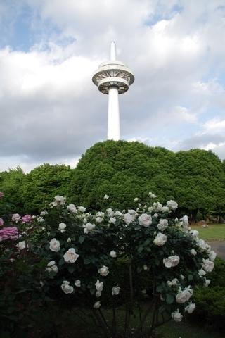 放送塔とバラ3