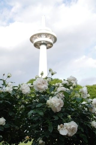 放送塔とバラ4