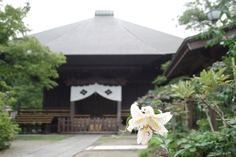 毘沙門堂とヤマユリ1