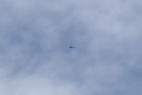 秋の空を飛ぶ赤トンボ2