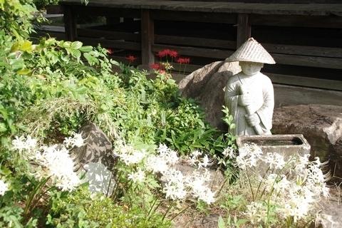 佛蔵院勝楽寺の彼岸花2