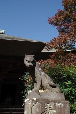 狛虎と紅葉2
