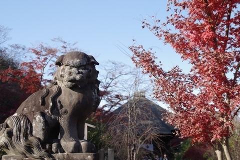 狛犬と紅葉2