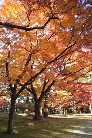 殿ヶ谷戸庭園の紅葉5