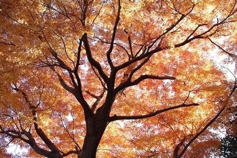 殿ヶ谷戸庭園の紅葉4