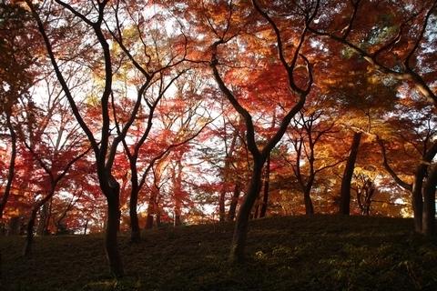 崖下から紅葉