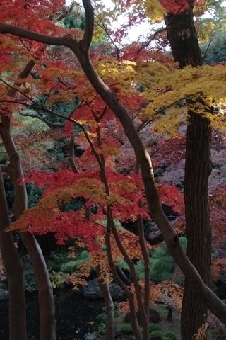 池の紅葉4