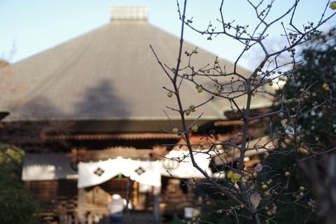 毘沙門堂とロウバイ