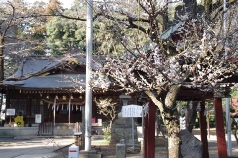 手水舎の白梅と本殿