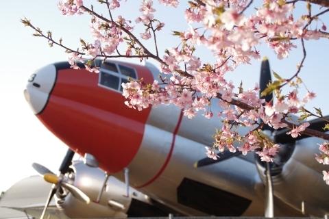C-46と河津桜2