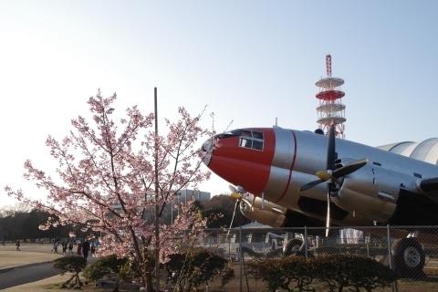 C-46と河津桜3