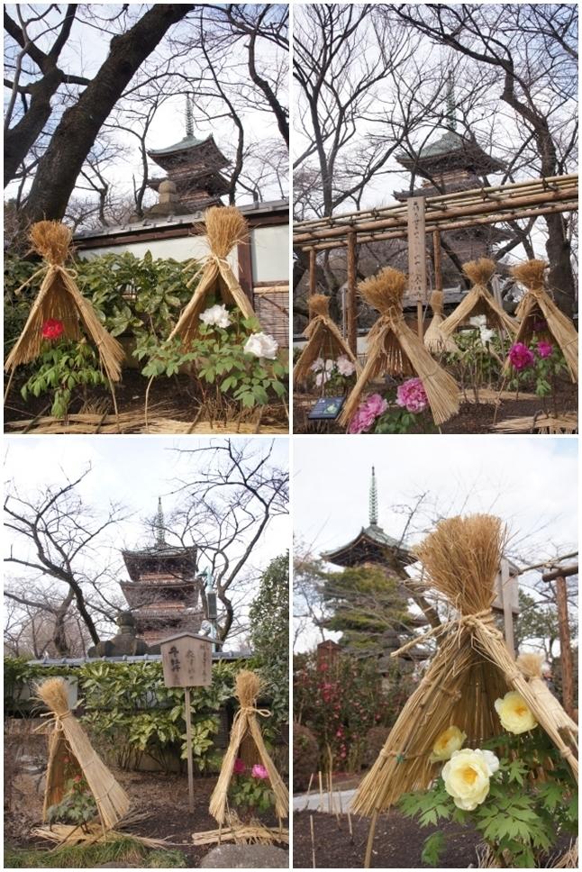 五重塔と寒牡丹1
