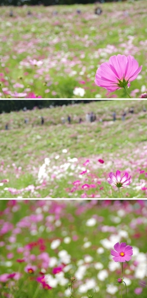 花の丘を見上げて2