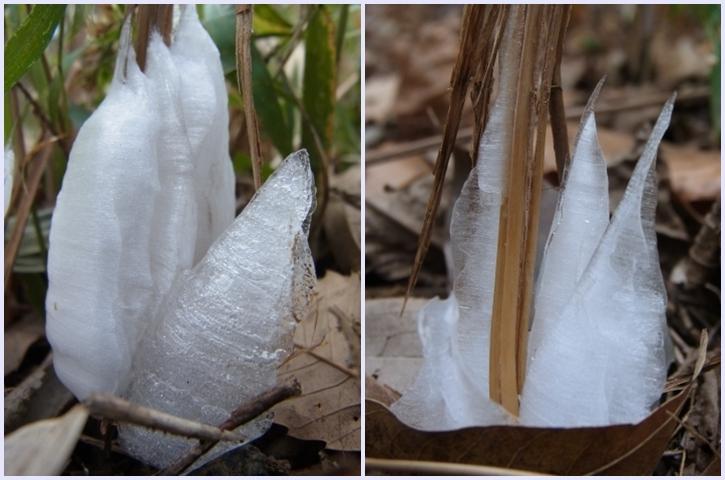 霜柱の氷注