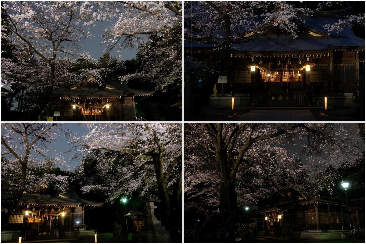 北野天神社 桜のライトアップ2