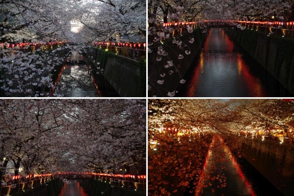 提灯と持った中目黒の桜