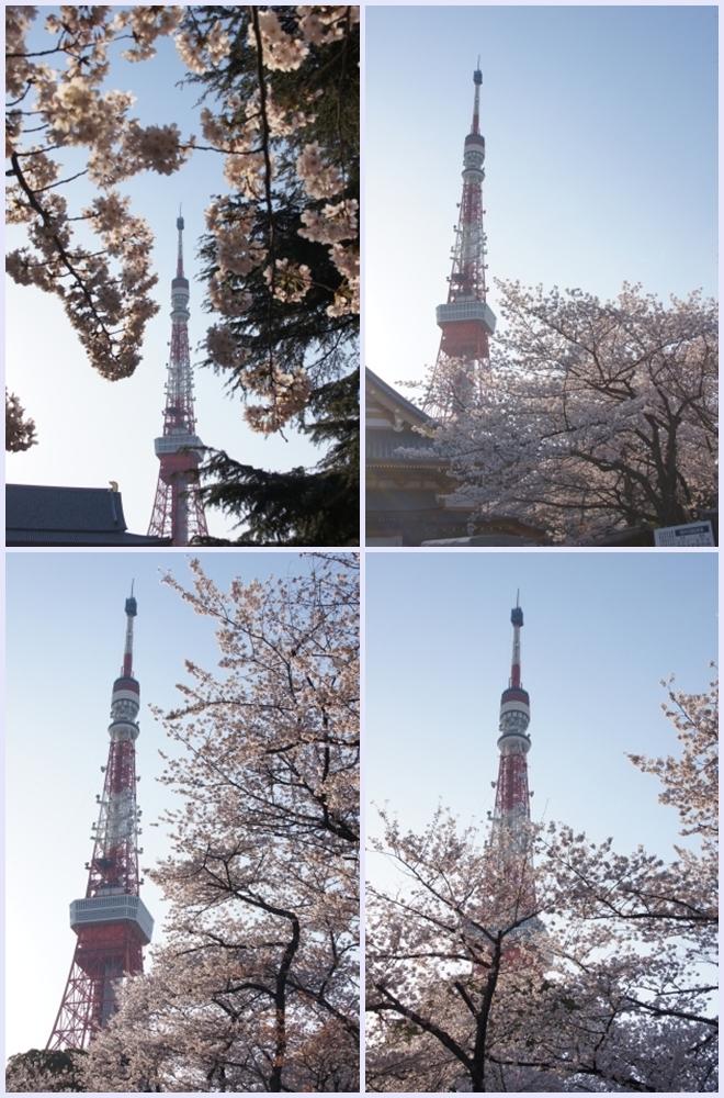 東京タワーとサクラ