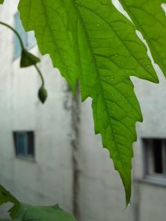 goya20110621.jpg