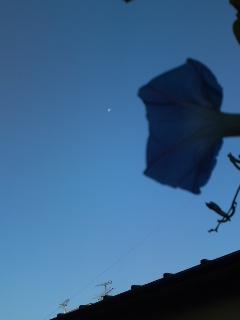 asagao20111117.jpg